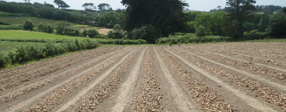 Lunnon Flower Farming Isles of Scilly Bulbs