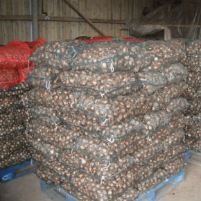Order Isles of Scilly Farm Bulbs